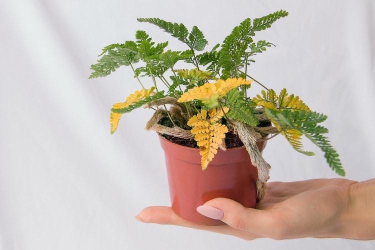 Najčastejšie škodce na izbových rastlinách